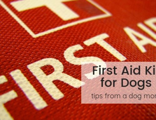 How to Make Your Own First Aid Kit for your Dog